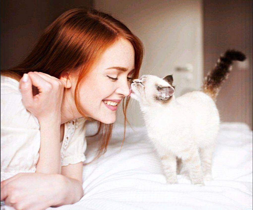 Почему кошки мурлыкают, мурчат и урчат, откуда берется этот звук