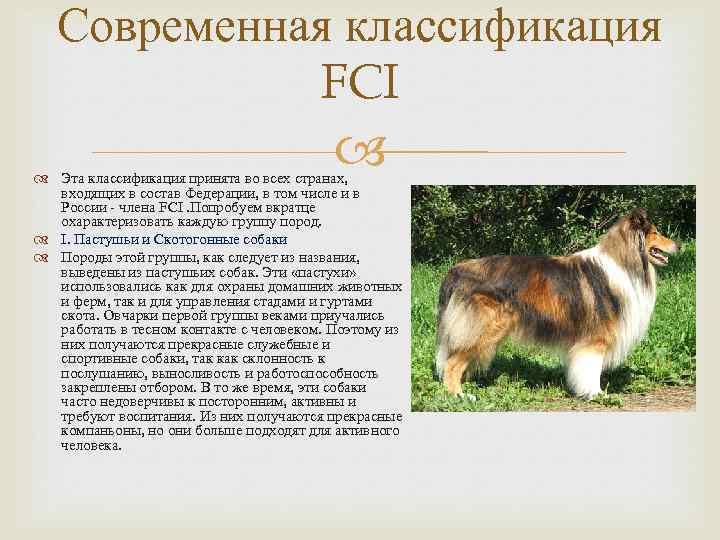 10 группа fci породы. как классифицируются породы собак? классификация по версии мкф - медицина для тебя