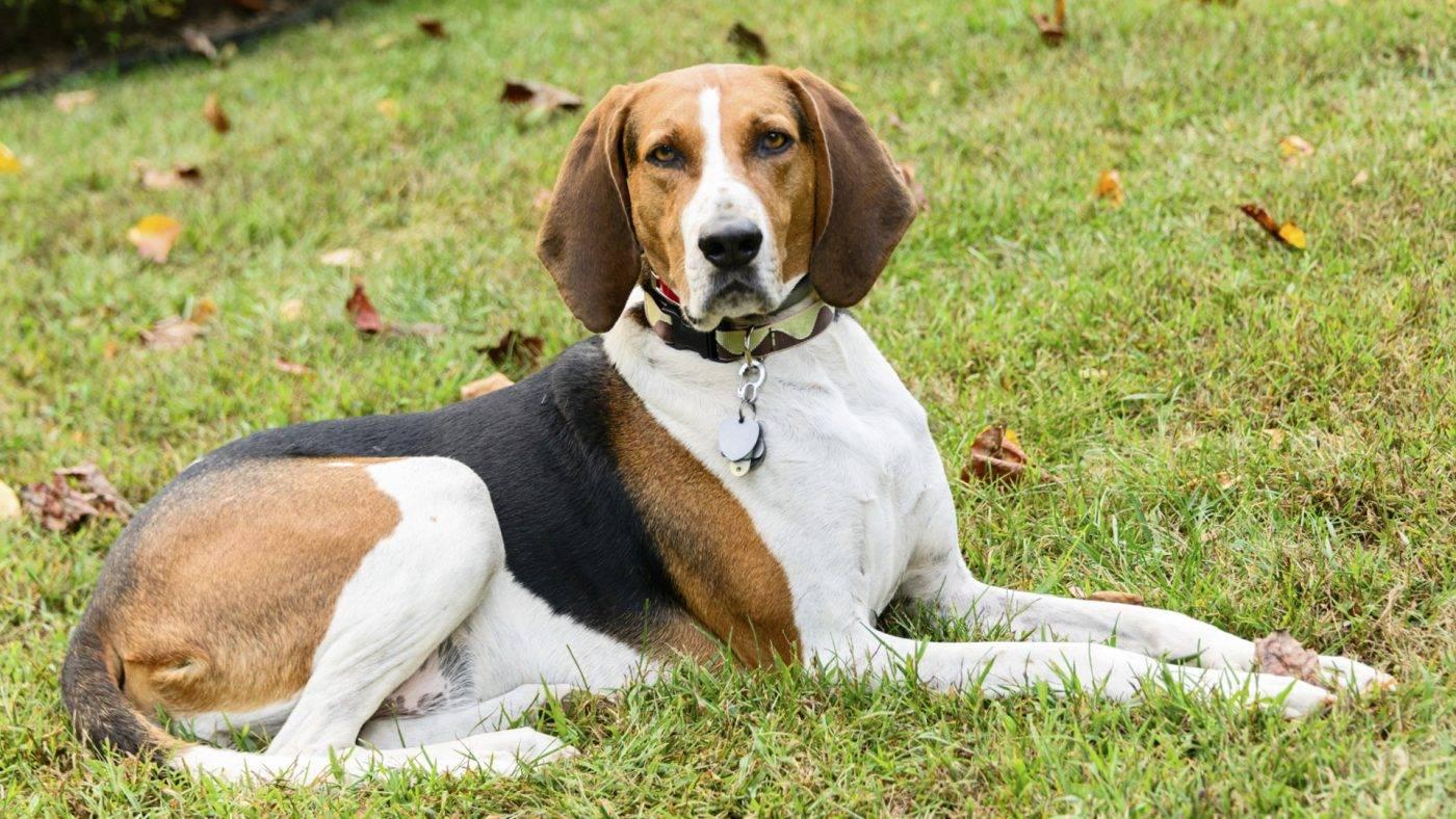 Царство терьеров – английские породы собак с описанием и фото