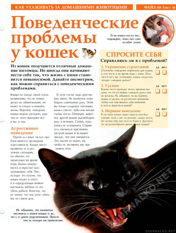 Агрессия кошки — советы экспертов как исправить излишнюю агрессию у кошки (105 фото и видео)