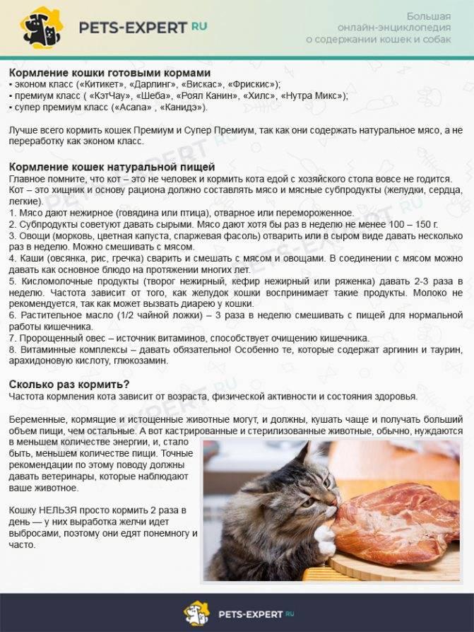 Как котенка научить самостоятельно кушать из миски, когда малыши начинают есть сами?