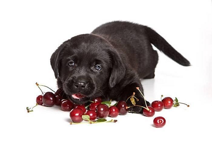 Как вы думаете, можно ли малину собаке?