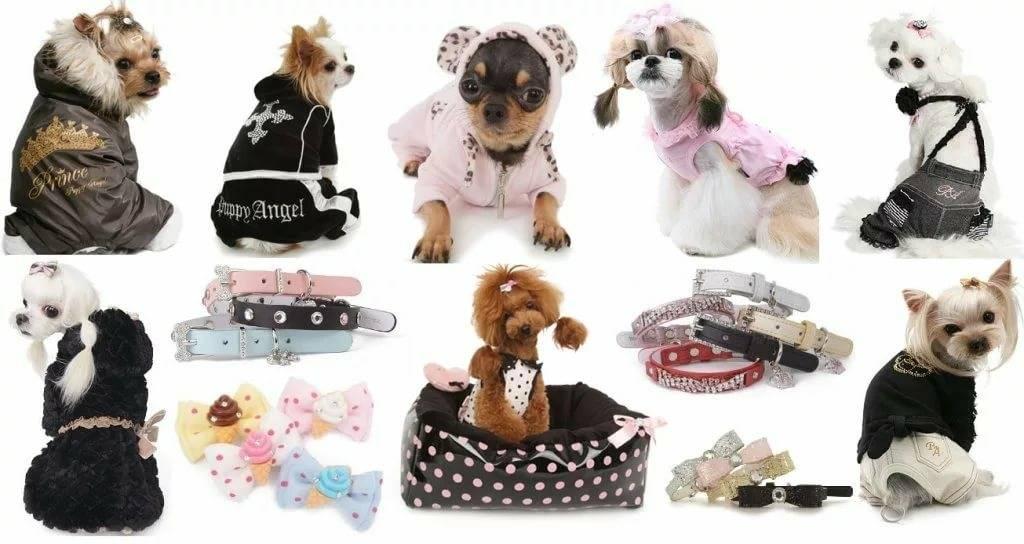 Особенности, виды, плюсы и минусы одежды для собак | живность.ру