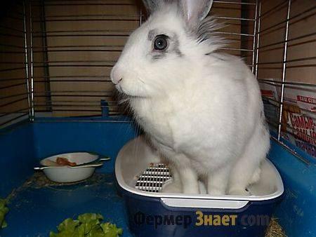 Как приучить кролика к лотку и туалету в отведенном месте