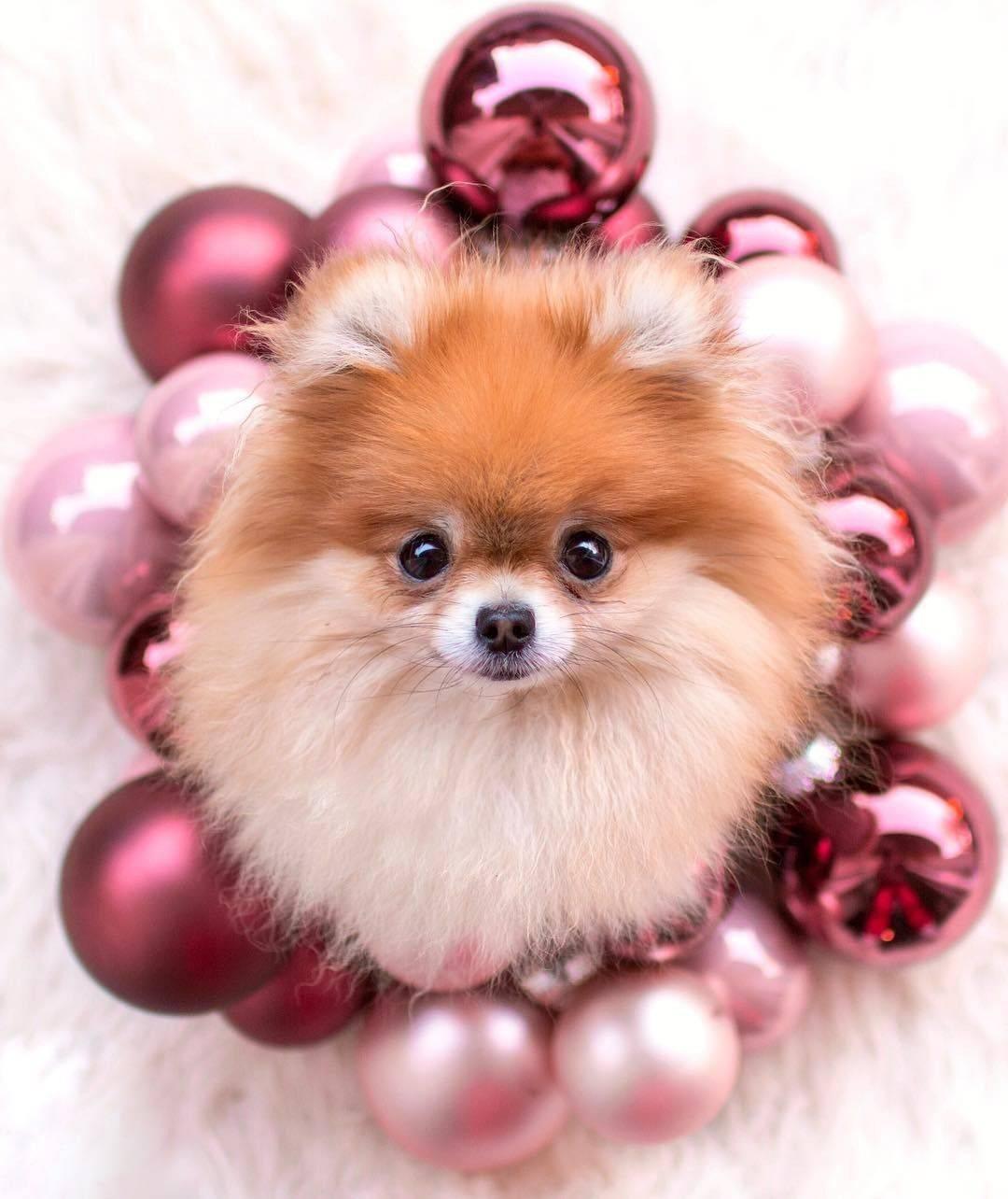 Самые красивые породы собак: фото и название, характеристики и описание