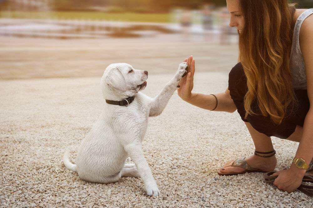 Топ-10 – подборка лучших пород собак для детей