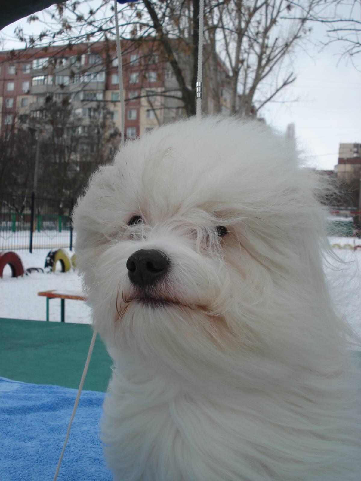 О.д.и.с - одесская домашняя идеальная собака