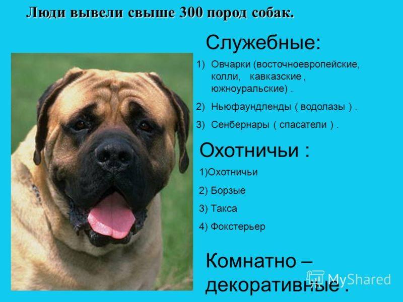 Самая древняя порода собак в мире