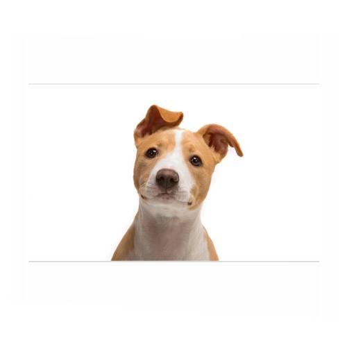 Икота у собак: почему щенки икают и что делать в этом случае