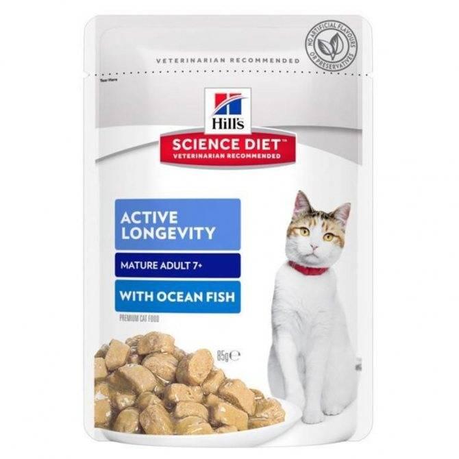 Чем кормить кошку? эксперт рекомендует