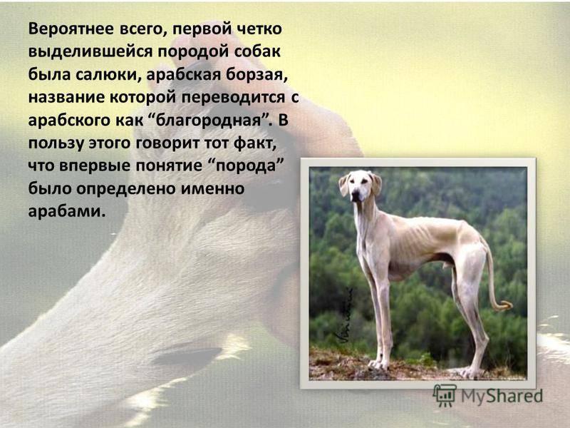 Норные породы собак: список представителей с фотографиями, названиями, описаниями и ценами