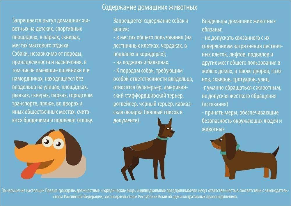Почему собака нечистое животное в православии