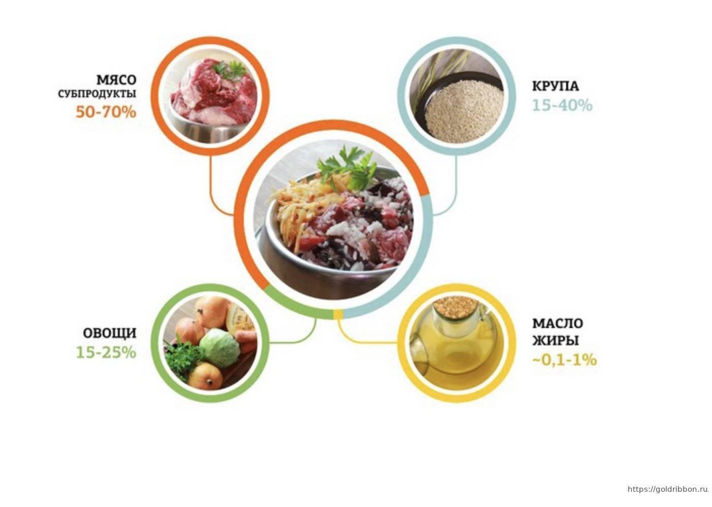 Чем кормить мопса: список разрешенных и запрещенных продуктов, как правильно выбрать корм, питание для щенков и взрослых собак