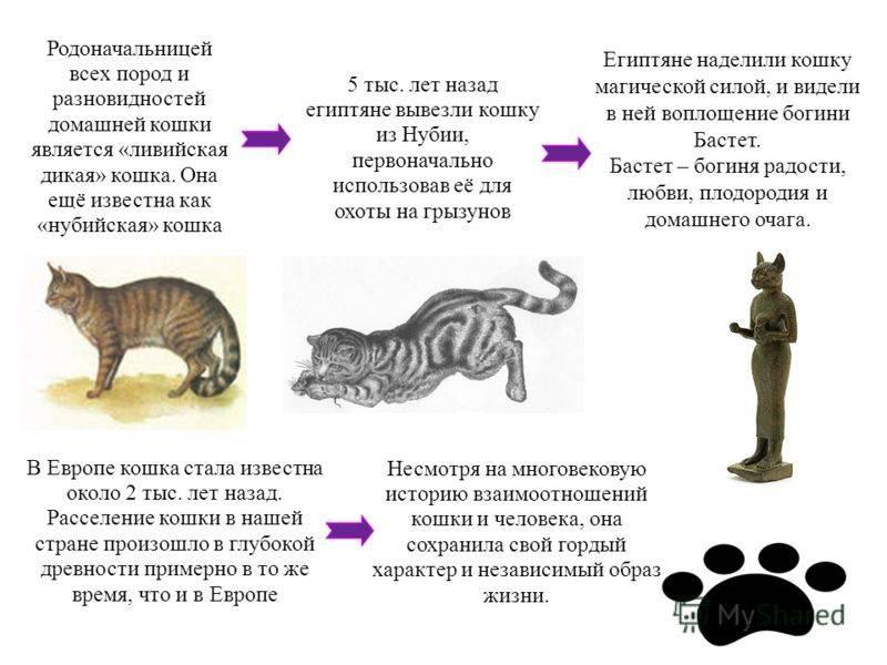 Характер кошек: породы, описание поведения, виды