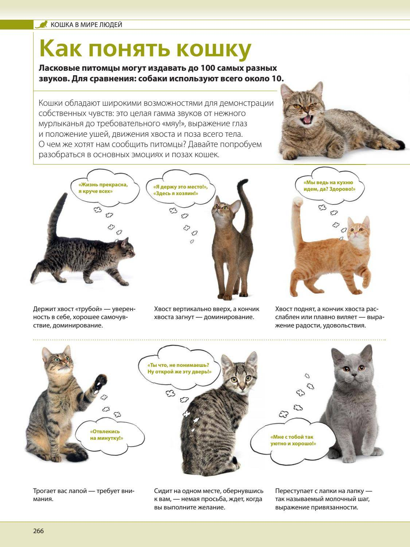 Как понять язык кошек