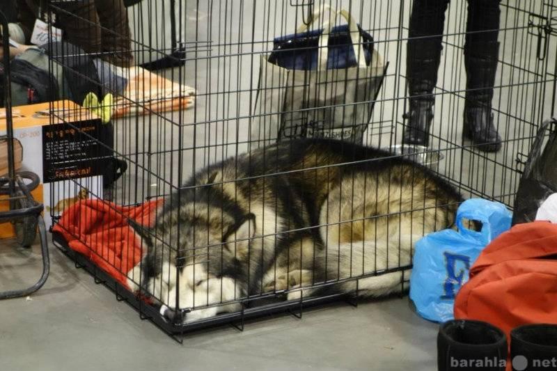Собачья клетка — уютный дом или место заключения?