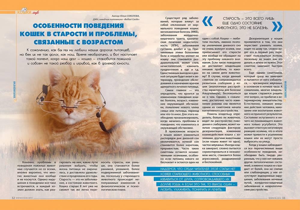 Почему кот себя ведет агрессивно, как помочь питомцу?