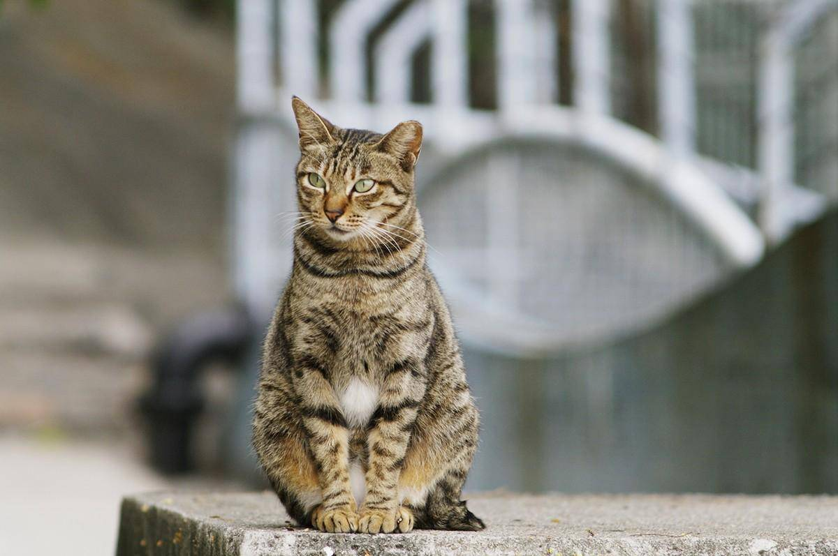 Самые умные породы кошек: топ 10