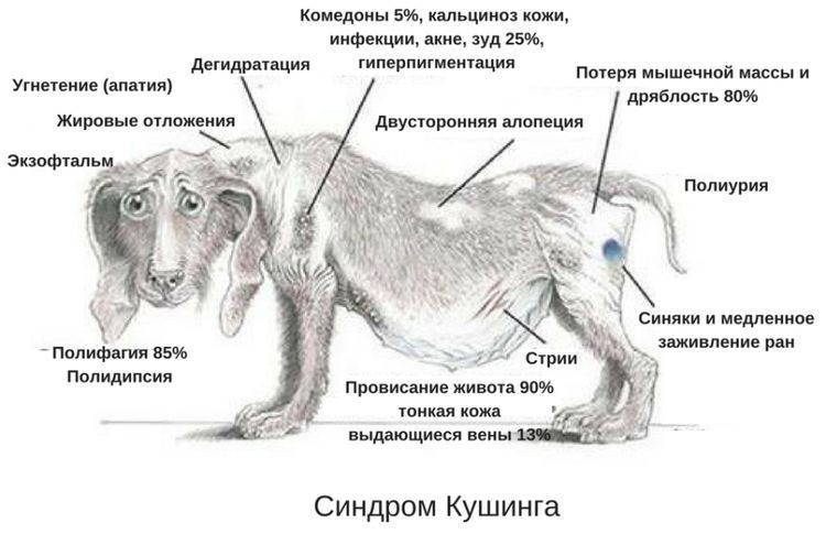Нейротоксикозы собак и кошек