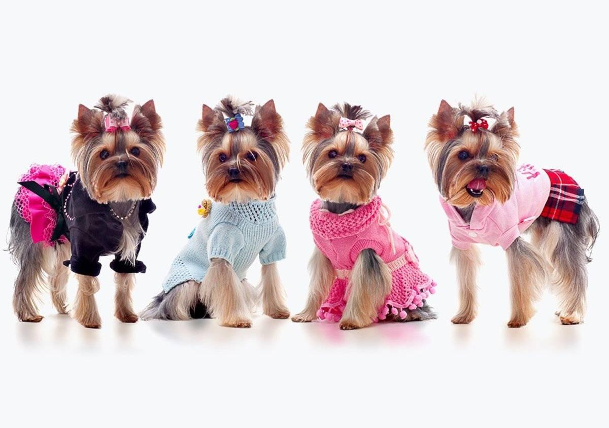 Одежда для собак мелких и средних пород мальчиков и девочек