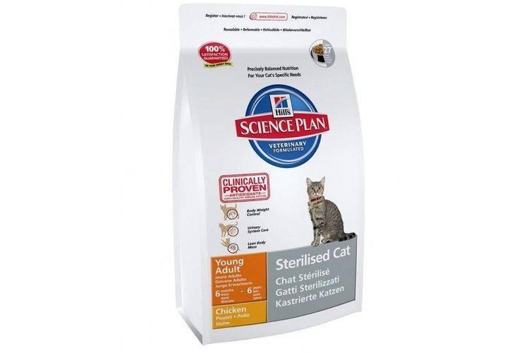 Как правильно выбрать корм для кошек