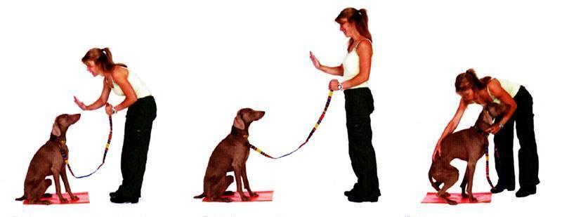 3 способа научить собаку команде «ко мне»