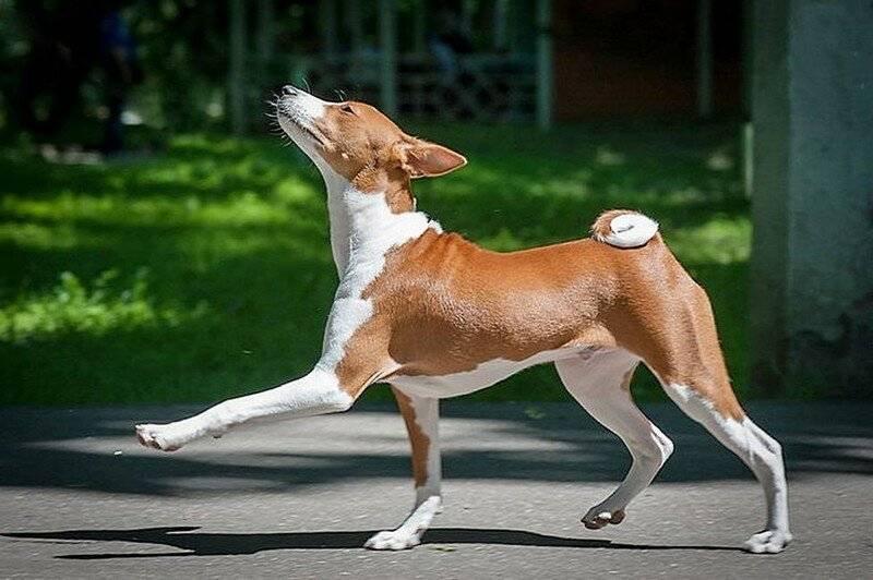 Лучшие породы маленьких собак для любого дома