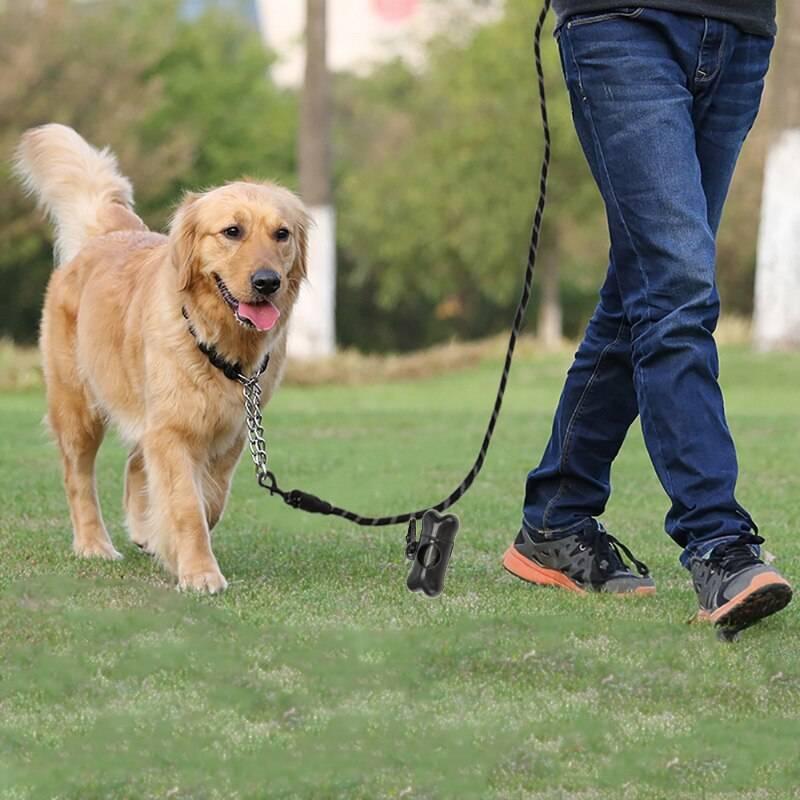 Как отучить собаку тянуть поводок на прогулке