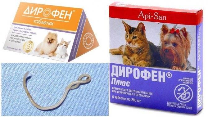 Дирофен для кошек| инструкция по применению дирофена кошкам