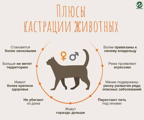 Как отучить собаку метить в квартире