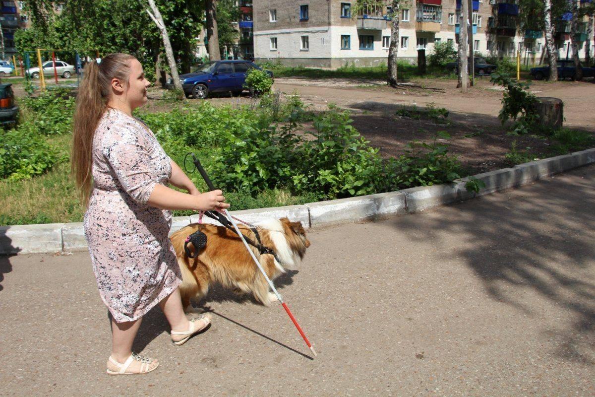 Собака-поводырь | порода лучших, фото, сколько стоит