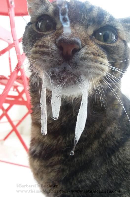 Кошку рвет слюной с белой пеной - что делать?| ветклиника зоостатус
