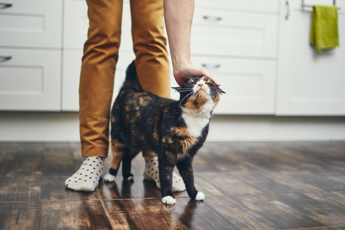 5 признаков, что кошка предупреждает вас о негативе в доме