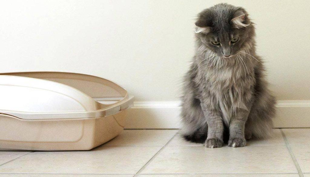 "Какие запахи не любят кошки? | | блог ветклиники ""беланта"""