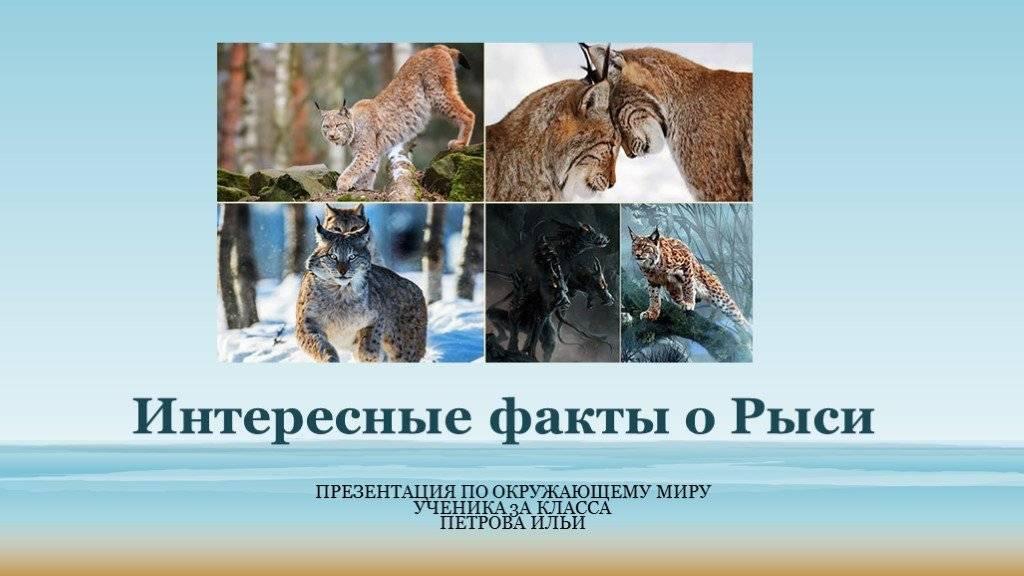 28 интересных фактов о русском языке • всезнаешь.ру