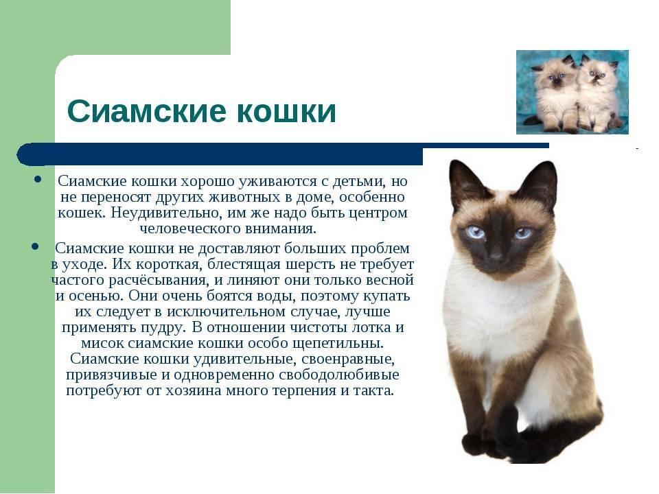 Невская маскарадная кошка: описание породы, возможные окрасы, характер и повадки, достоинства и недостатки, выбор котенка, фото, отзыв