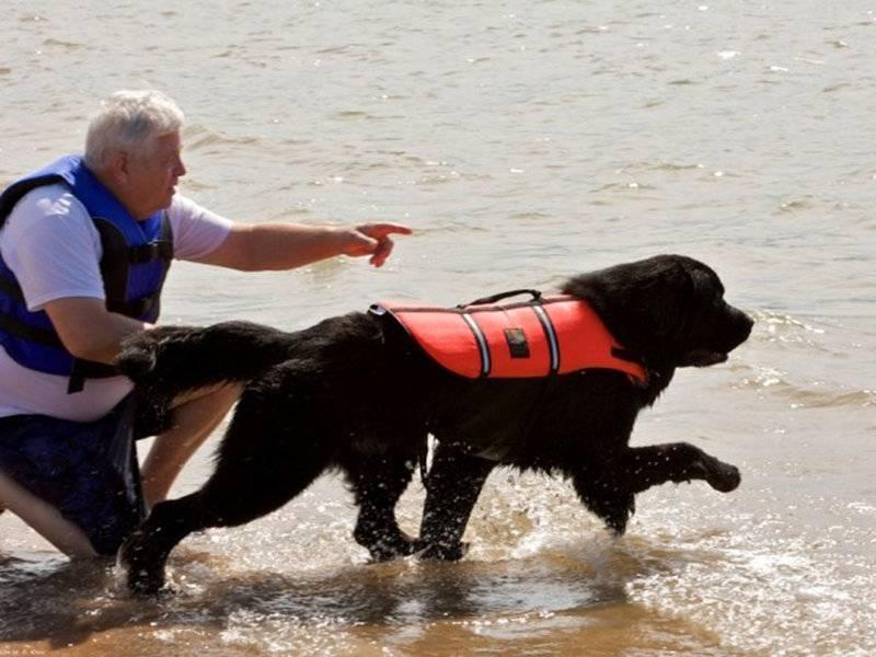 Породы собак-спасателей: на воде, в горах, в экстренных службах, как готовят собак