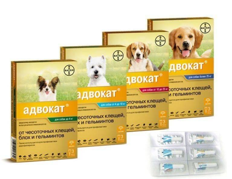 Адвокат 4-10 капли для собак - купить, цена и аналоги, инструкция по применению, отзывы в интернет ветаптеке добропесик