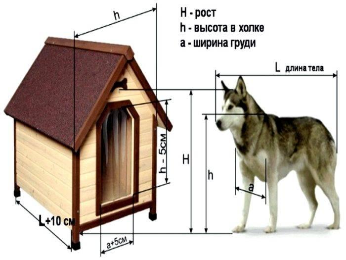 Будка для собаки своими руками: чертежи, размеры и фото