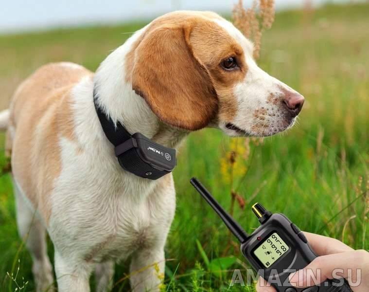 Рейтинг лучших электронных ошейников для собак в 2021 году