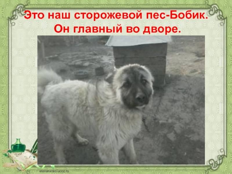 Московская сторожевая собака. описание, особенности, уход и цена породы | sobakagav.ru