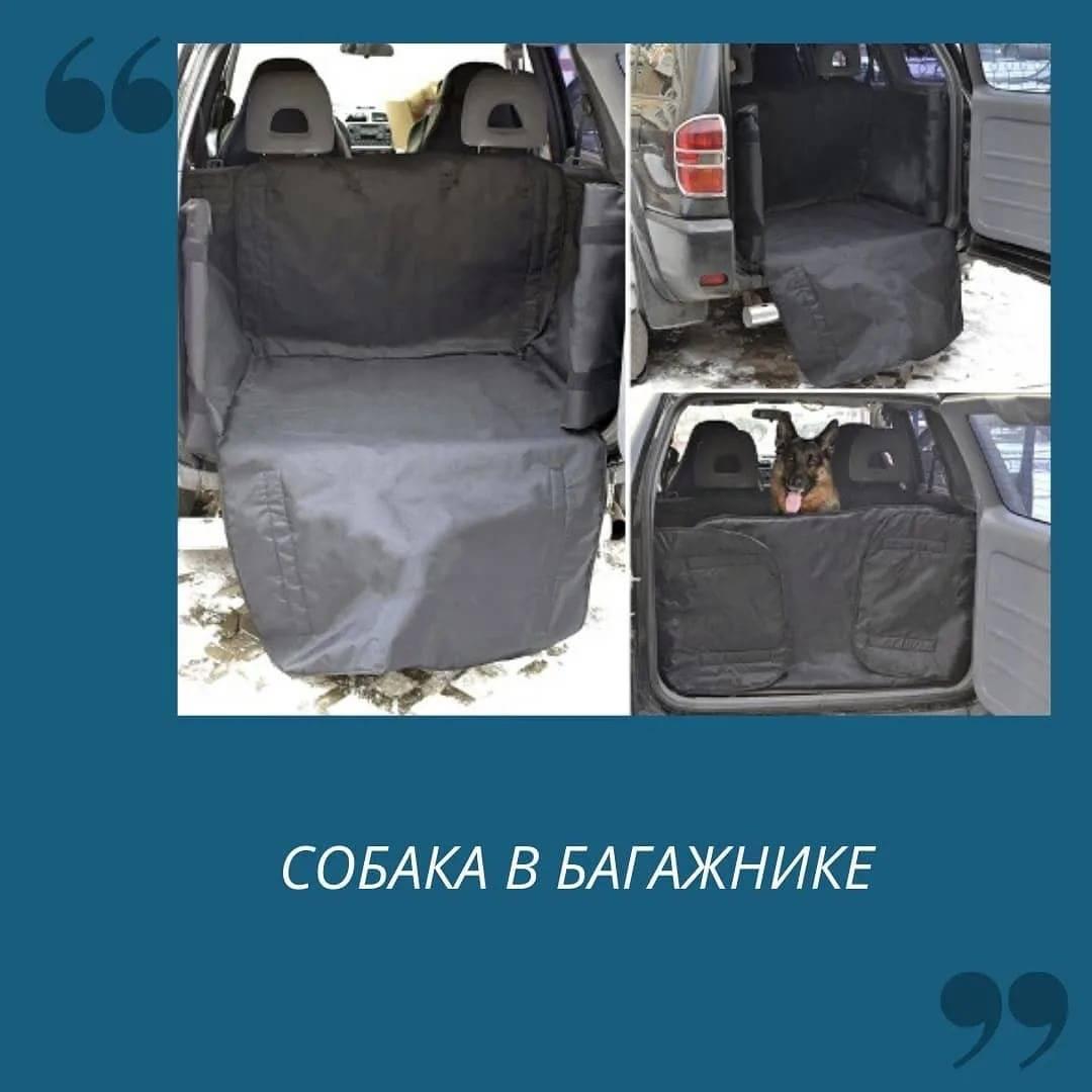 Как перевозить животное, чтобы не испортить салон машины | автоприбамбас.com