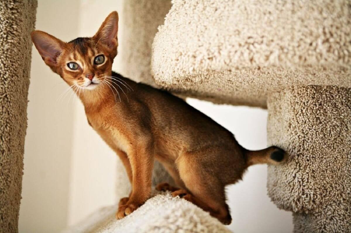 Кошки каких пород самые ласковые?