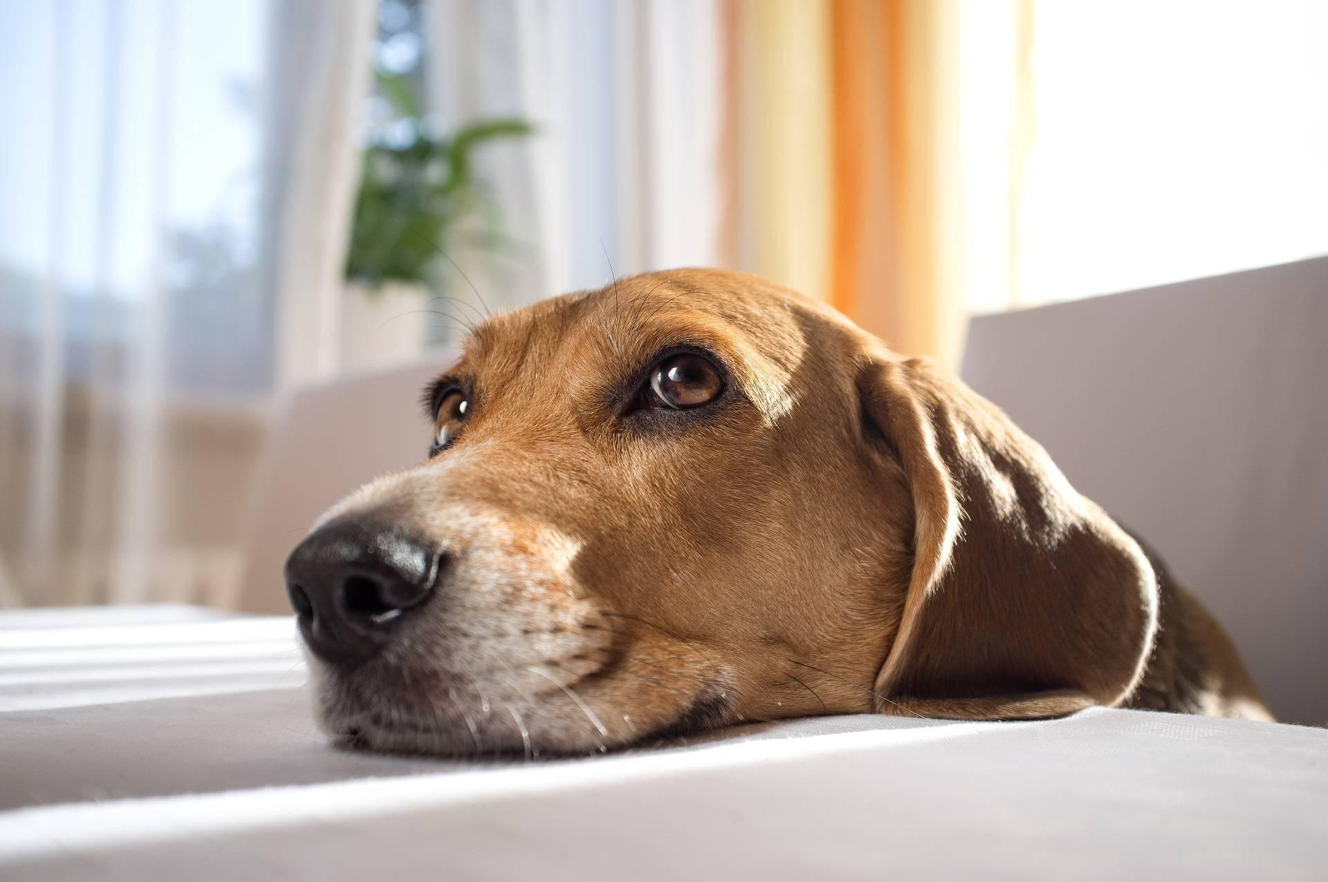 Страсти собачьи: почему собаки наклоняют голову, когда слушают людей