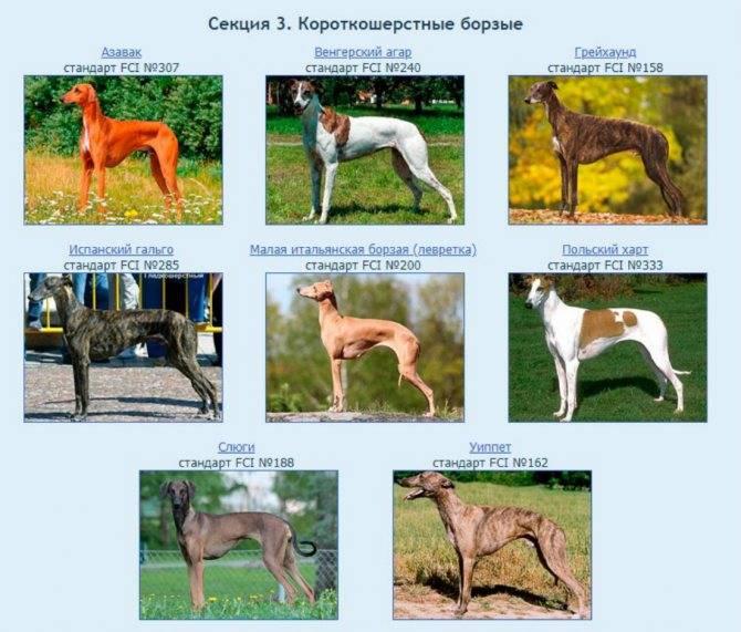 Какие собаки относятся к догам: 6 пород с фото и описанием
