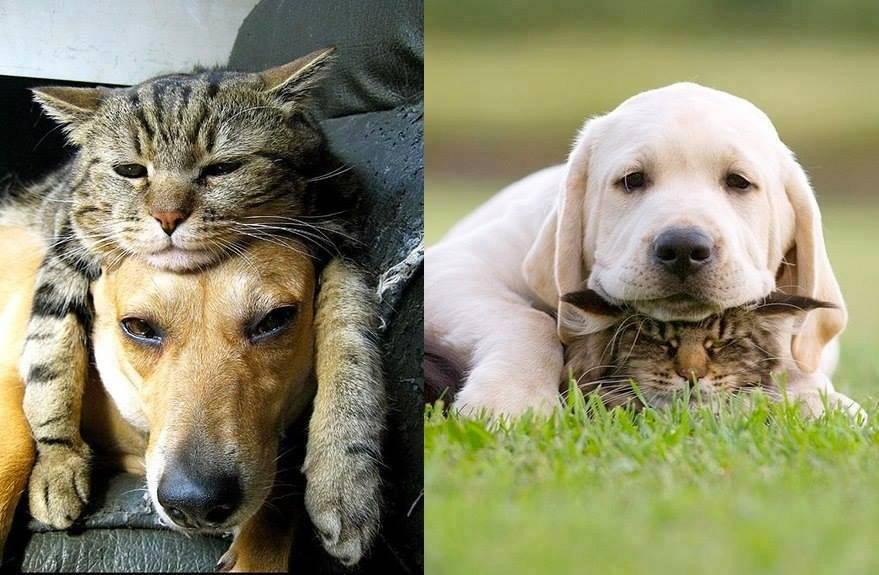 Могут ли собака и кошка стать друзьями?