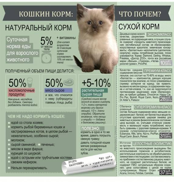 Как правильно подобрать корм для котят от 1 месяца?