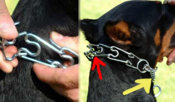 Удавка для собак с фиксатором: как использовать правильно