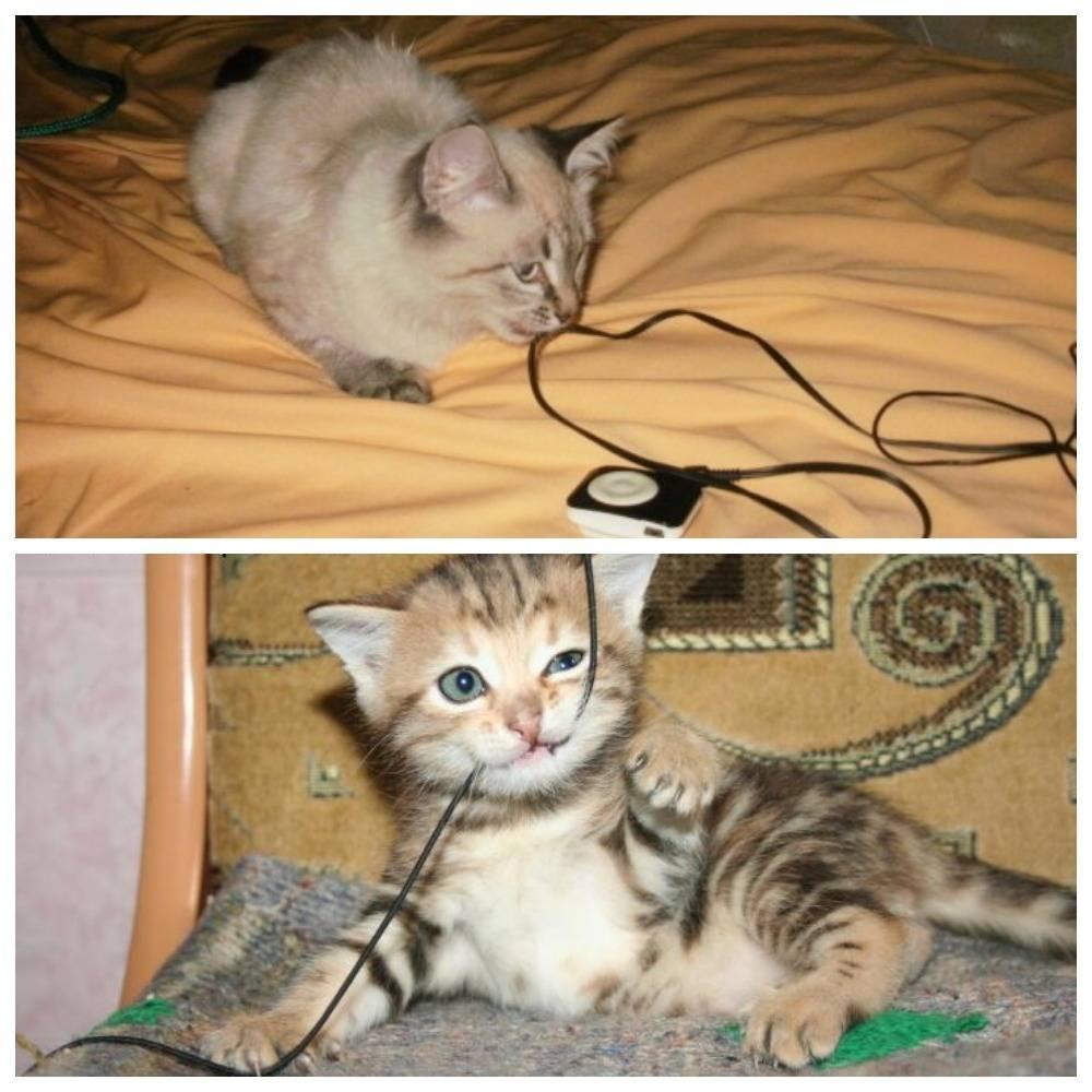 Как отучить кота грызть провода?