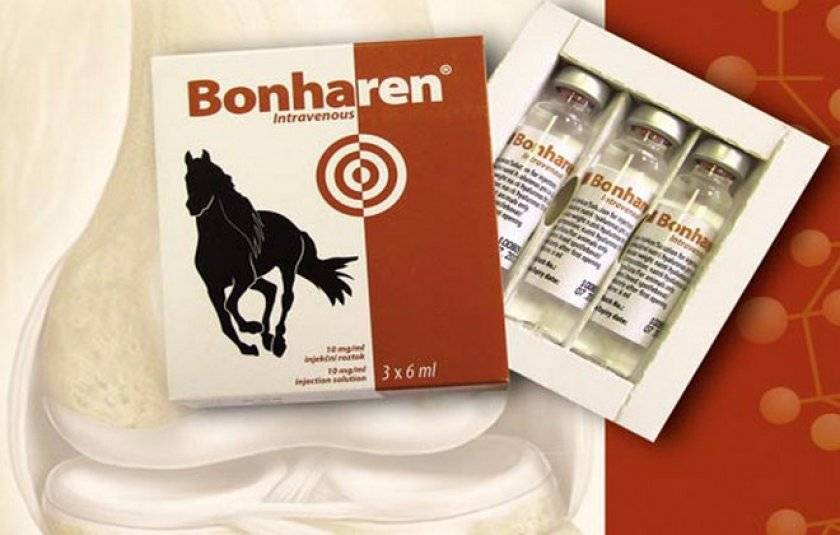 Всё, что вам необходимо знать про бонхарен для собак!